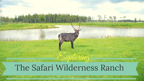 Exploring the Safari Wilderness Ranch